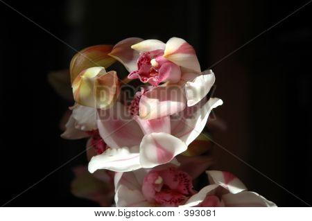 Orchids1