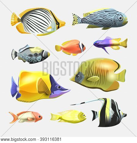 Sea Beautiful Fish Collection Isolated On White Background. Flat Design Fish. Vector Illustration, F