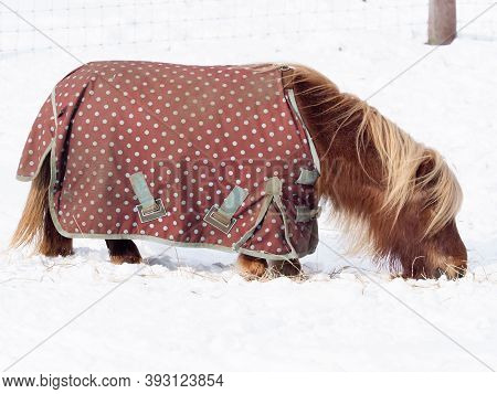 A Shetland Pony In A Rug Stands In A Field Of Deep Snow.