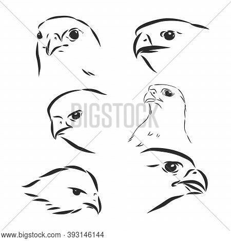 Black And White Illustration. Sketch Of Bird For Tattoo Art. . Falcon Bird, Vector Sketch Illustrati