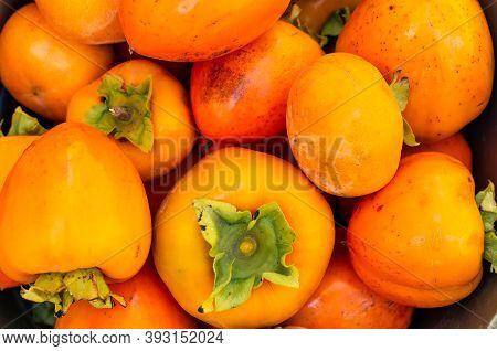 Orange, Ripe Persimmon. Farmer Autumn Harvest In The Garden. Copy Space