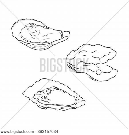 Oysters Set Isolated On A White Background. Oysters Vector Sketch Illustration
