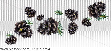 Realistic Pine Cone And Conifer Tree Branches Pine On Transparent Background. Isolated Christmas Pin