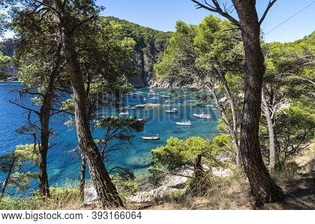 View Of Several Boats Through The Trees With Anchorage In Cala Pedrosa In Llafranc, Girona, Cataloni