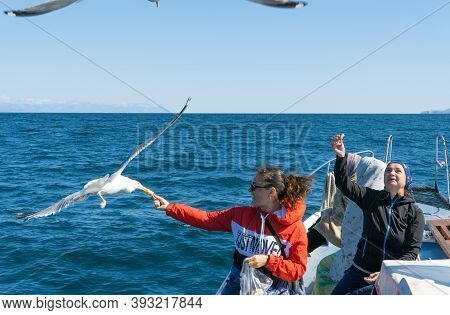 Russia, Irkutsk Region, Khuzhir, August 2020: Women Feed Bread To Passing Gulls. Birds Hover Over Th
