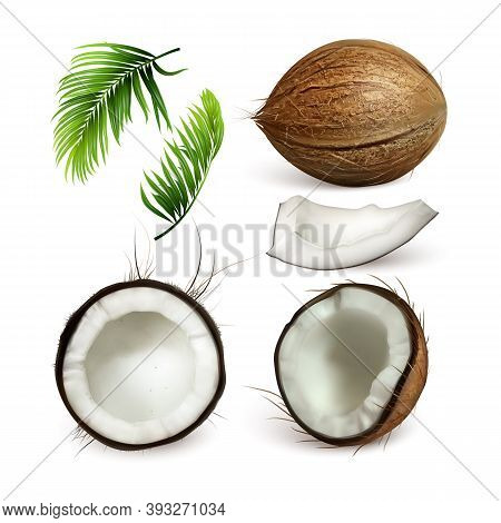 Coconut Tropical Tree Nut And Branch Set Vector. Collection Of Different Part Of Coconut, Sliced Cut