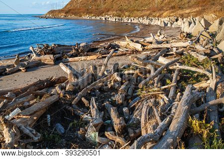 Plastic Bottles And Wastes Trash Pollute The Beach. Old Trees And Rubbish Washed Ashore After The St