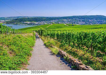 Rudesheim Am Rhein, Germany, August 24, 2019: Tourists Walking Down Path Road In Vineyards Green Fie