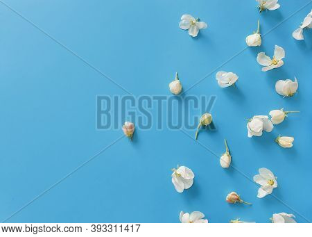 Blooming Buds Of Apple / Pear Flowers On A Bright Blue Background. Basis For A Spring Card / Invitat