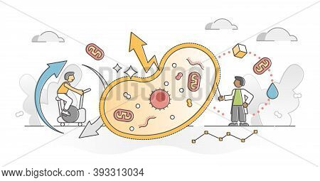 Cellular Respiration As Metabolic Chemical Energy Atp Cycle Outline Concept. Convertion From Nutrien