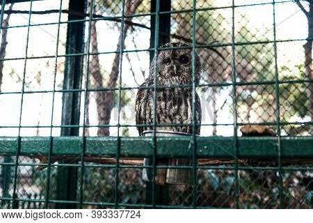 Sleepy Owl During Day With One Eye Closed. Wild Animal Held Captive, Peeking At Tourists In A Zoo Fr
