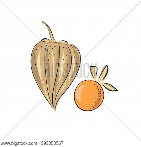 Set Superfoods. Vector Illustration Physalis, Berries. Hand Drawing Flowers, Leaves, Small Tomato, L