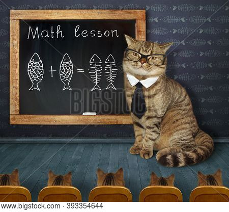 A Cat Teacher Wrote On The Chalkboard A Funny Mathematical Formula For Its Students In The Classroom