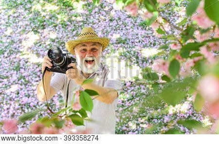 Man Tourist Use Camera Take Photo Of Cherry Blossom. Sakura In Full Bloom Photography. Senior Bearde