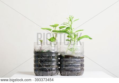 Plastic Bottles Water Diy For Planting Vegetables Plant And Decoration At Home, Reuse And Recycle Co