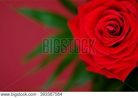 Red Rose Close-up On A Red Background.valentine's Day Greeting Card. Floral Card With Bright Red Flo