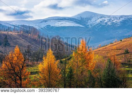Sunny Afternoon In Mountainous Countryside. Trees In Autumn Foliage. Snow Capped Peak In The Distanc
