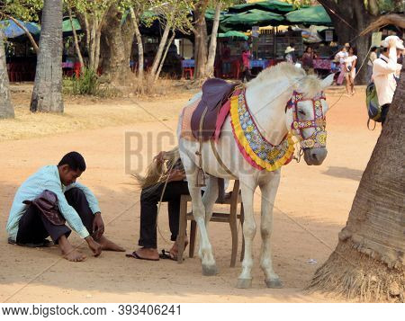 Dressy Holiday Horse For Ride For Tourist Walks In Cambodia  - Siem Reap,cambodia 02/22/2011