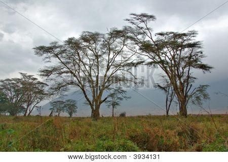 Inside The Ngorongoro Crater