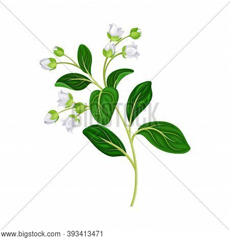 Flower Twig With Small White Florets And Green Leaves Vector Illustration