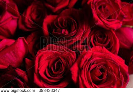 Natural Red Roses Background Top View. Bouquet Of Red Roses. Big Bunch Of Red Roses. Colorful Flower