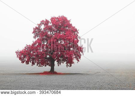Black And White Photo With Black And White Landscape With Black And White Tree Tree With Red Leaves