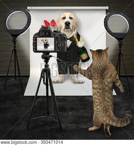 A Cat Photographer Is Photographing A Dog In A Black Suit With Flowers And Wine In Its Photo Studio.