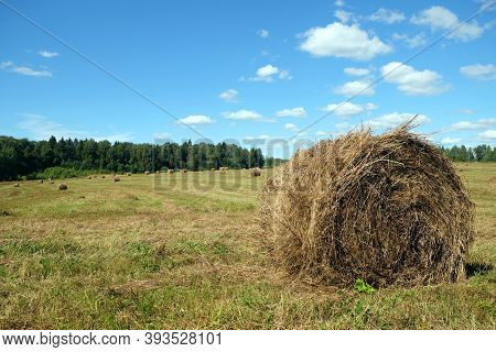 Rural Landscape With Summer Field With Many Rolled Haystacks With One Of It Close-up On Front And Th