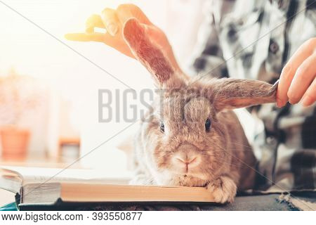 A Funny Lop-eared Rabbit Sits On A Womans Lap, Looking At An Open Book. The Ears Are Raised In Diffe
