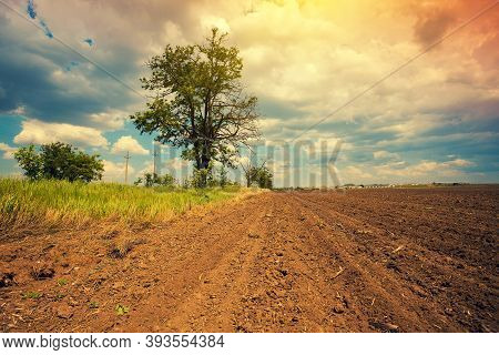 Arable Field With Dramatic Cloudy Sky And Tree