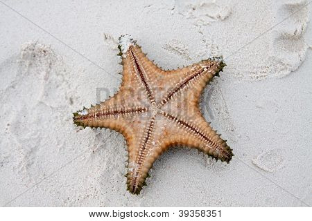 Starfish On Clear Water