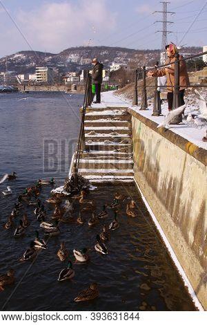 Cluj-napoca, Romania - January 15, 2019: People Feeding Ducks On Somes River In Winter. Woman Feedin