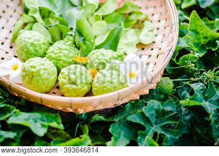 Raw And Fresh Bergamot With Leaf In Bamboo Basket