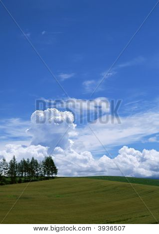 The Blue Sky With Trees And Grass