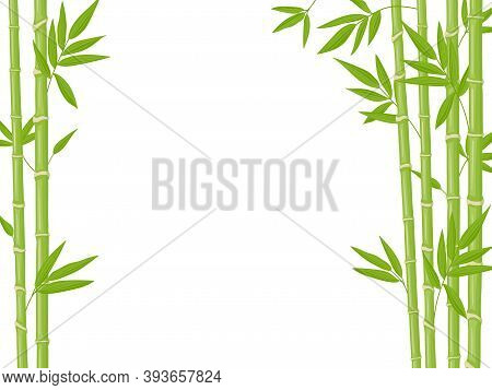 Bamboo Background. Asian Fresh Green Bamboo Stalks, Natural Bamboo Plant Backdrop, Stick Plants With