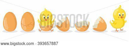 Cartoon Hatched Easter Egg. Cracked Chicken Eggs With Cute Chicken Mascot, Newborn Baby Chick Bird H