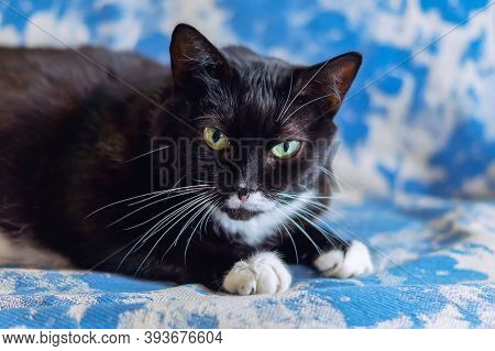 Cute Black Domestic Cat Is Lying And Resting At Home On The Couch. Selective Focus. Horizontal. A Ti
