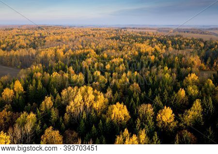 Autumn Scenery. Aerial View Woods. Beautiful Season In Forest. Autumn Mixed Woods