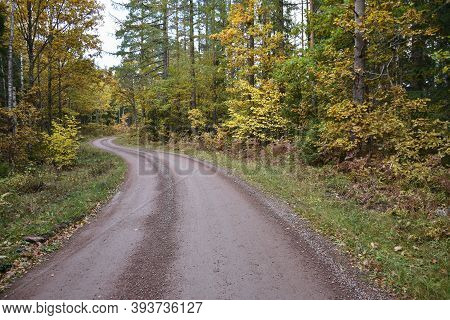 Winding Gravel Road Through A Colorful Forest In The Province Smaland In Sweden