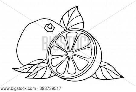 Vector Grapefrit Illustration. Citrus And A Half Fruit With Leaves, Decorative Elements On White Bac