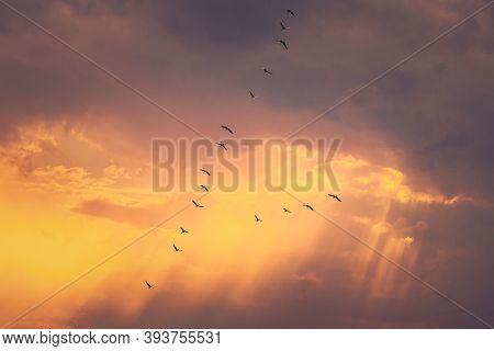 Flock Of Ducks Flying In Sunny Sunset Autumn Spring Sky During Their Migration. Altered Sunrise Sky.