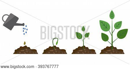 Green Plant Growth Phase Watering On White Background. Grow Process. Growing Plant Stages. Stock Ima
