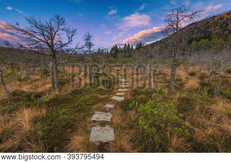 Tourist Trail Made Of Wooden Planks Over The Bog, Meander In The Forest, Tinovul Mohos, Transylvania