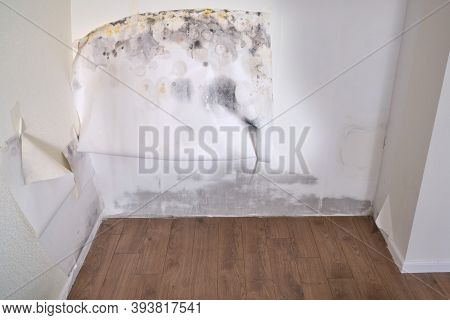 Wall In The Home Before And After Cleaning Wallpaper From Mold