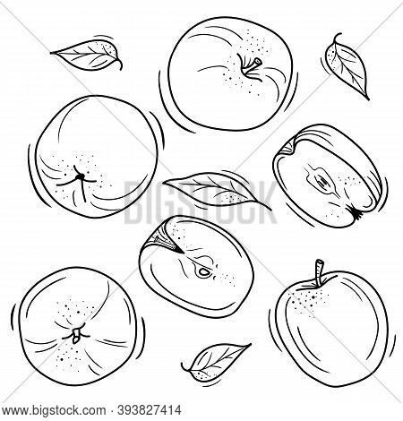 Vector Illustration Of Apples In Doodle Style. Contour Drawing Of An Apple. Minimalistic Fruit Desig