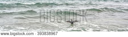 A Bird Spreads Its Wings While Swimming In The Sea