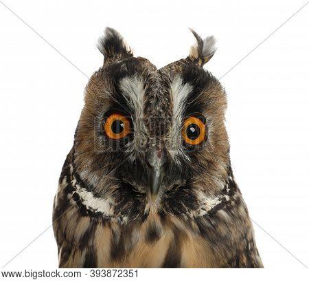Beautiful Eagle Owl On White Background, Closeup. Predatory Bird