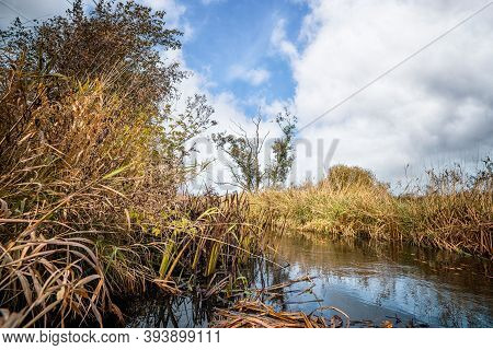 Nature Scenery With A Small River With Wild Plants And Rushes On A Bright Day In The Fall