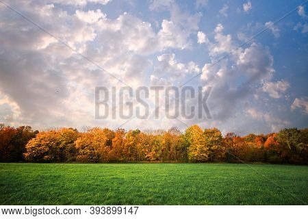 Trees In A Row In Autumn Colors On A Rural Green Field In The Fall At The Break Of Dawn
