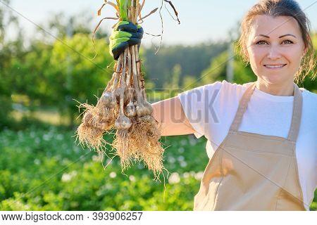 Smiling Woman Farmer Gardener Holding Fresh Dug Garlic Plant In Hand, Harvest Garlic Summer Sunny Ve
